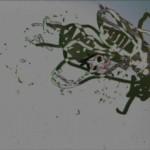 Flies-7