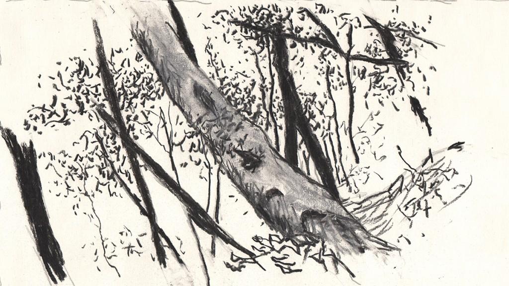 Yakushima.trees